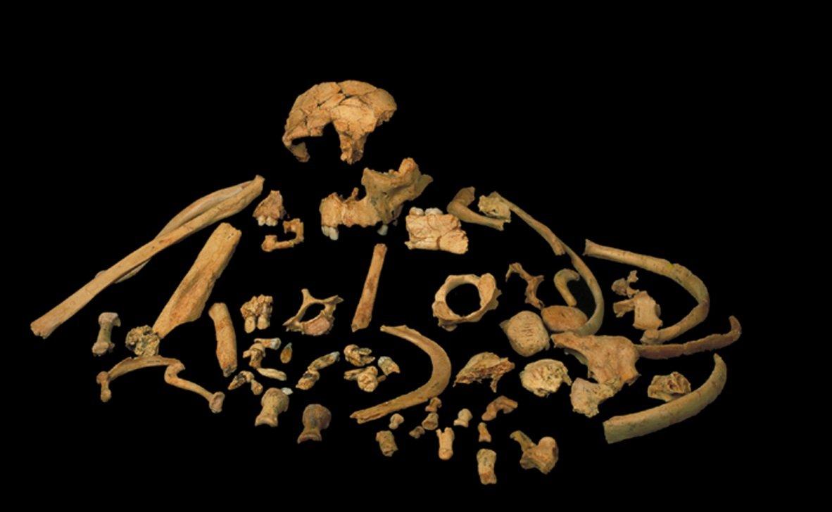 Oldest DNA from a Homo sapiens