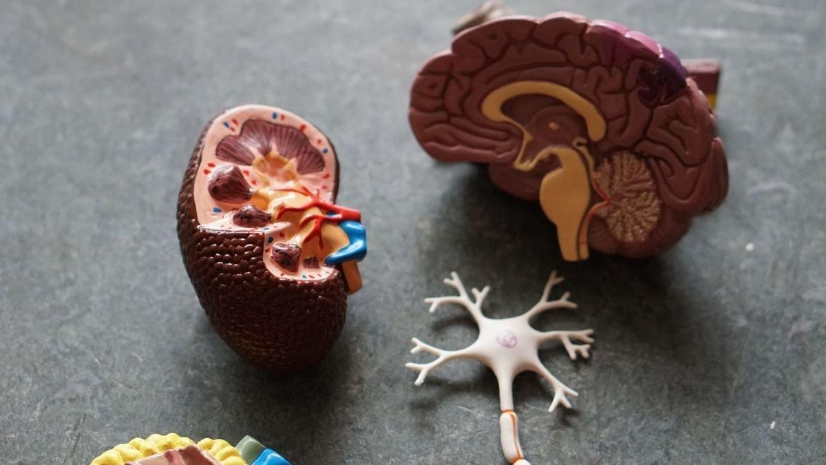 New 13 Rare Alzheimer's gene variants