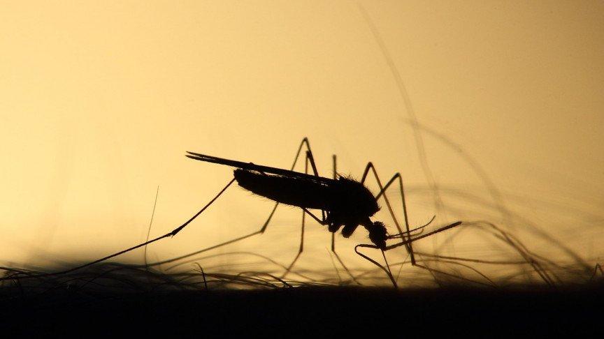 Oxitec Has Revealed New Gene-Hacked Mosquitoes