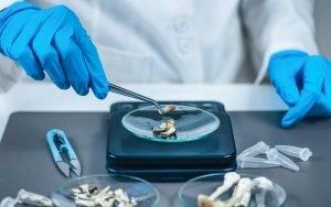 Halucenex Expanded Phase II Psilocybin Experiment to Embrace Non-Veterans with PTSD
