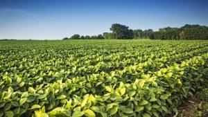Corteva and Andermatt to Solve Biocontrol Solutions
