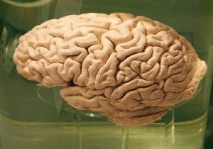Psychiatric Drugs Aid by Numbing Brain Function