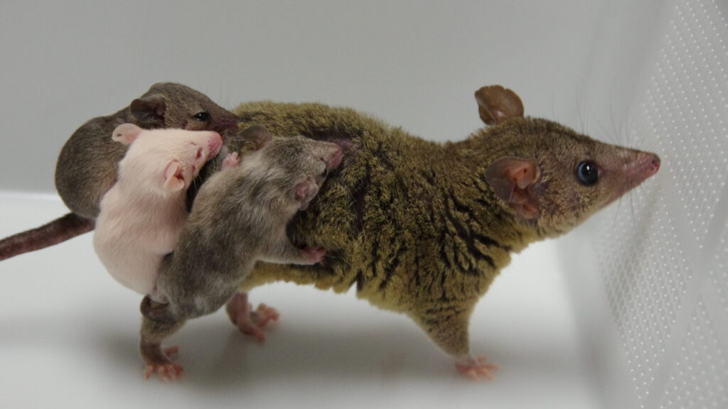 Insights on Necessary Changes in Gene-Edited Animals